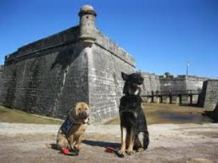 St Augustine Dog Friendly Restaurants